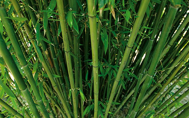 bd-pflanzen